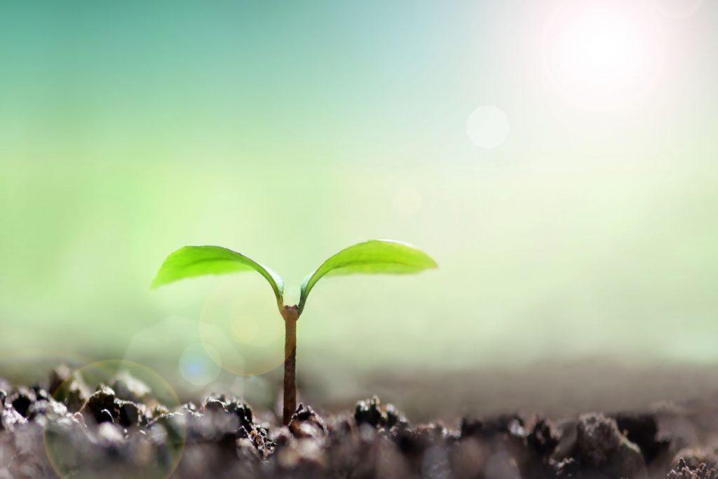 可能性の芽