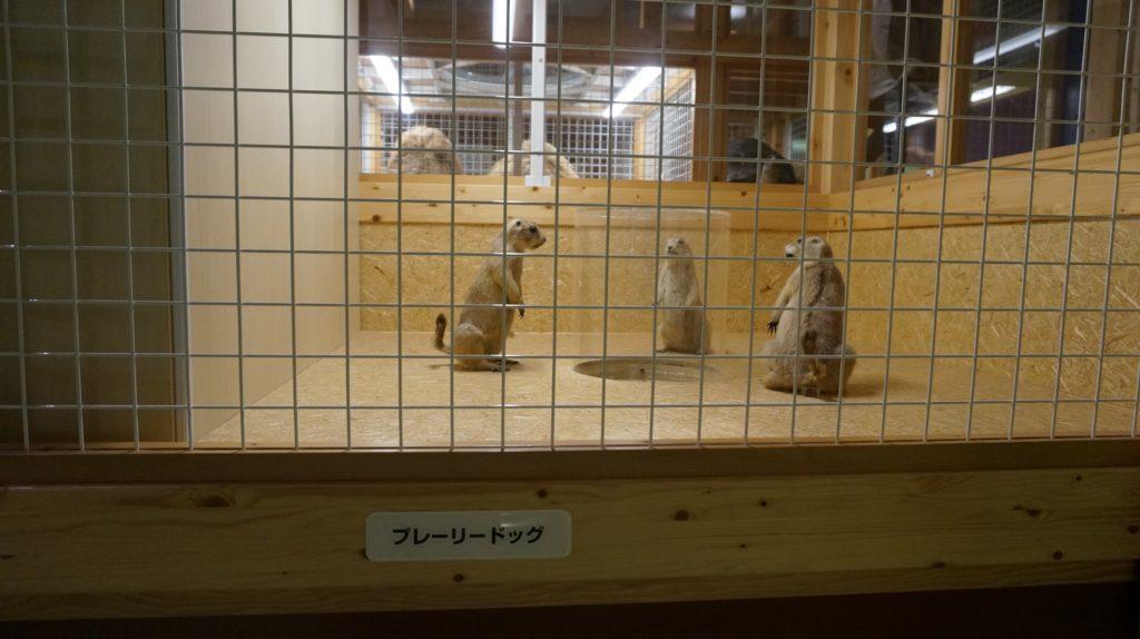 上野国立科学博物館コンパス